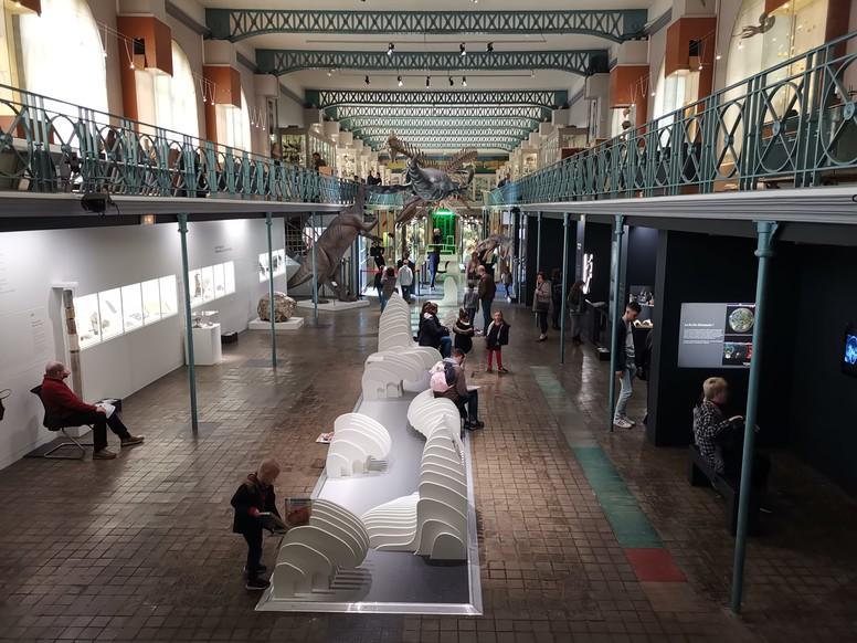 musee d histoire naturelle lille